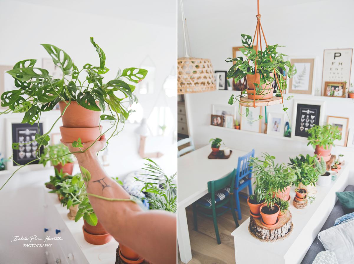Ekspozycja Roślin W Domu Projekt Zrób To Samskórzany
