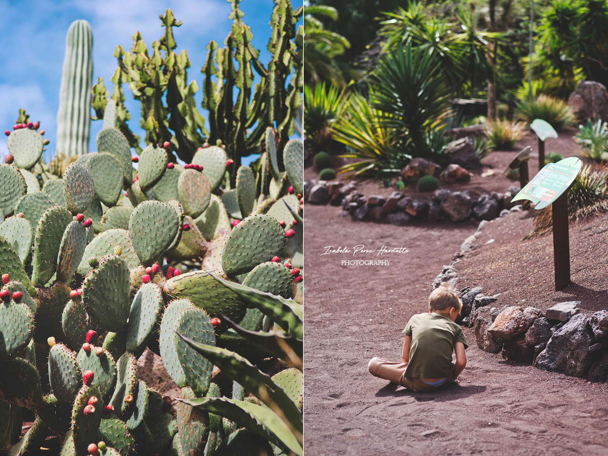 Fuerteventura all inclusive, cactus, succulent photography
