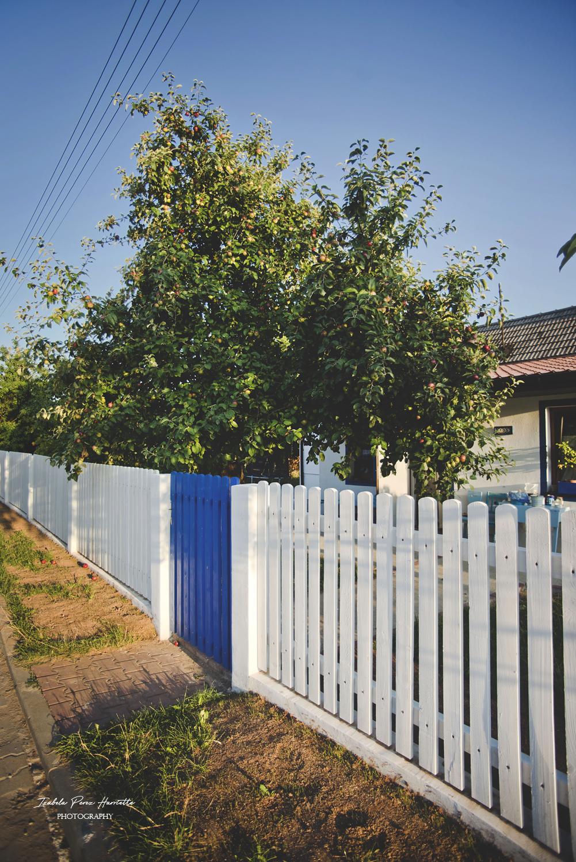 biały płot, drewniany płot, niebieska furtka, white wood fence