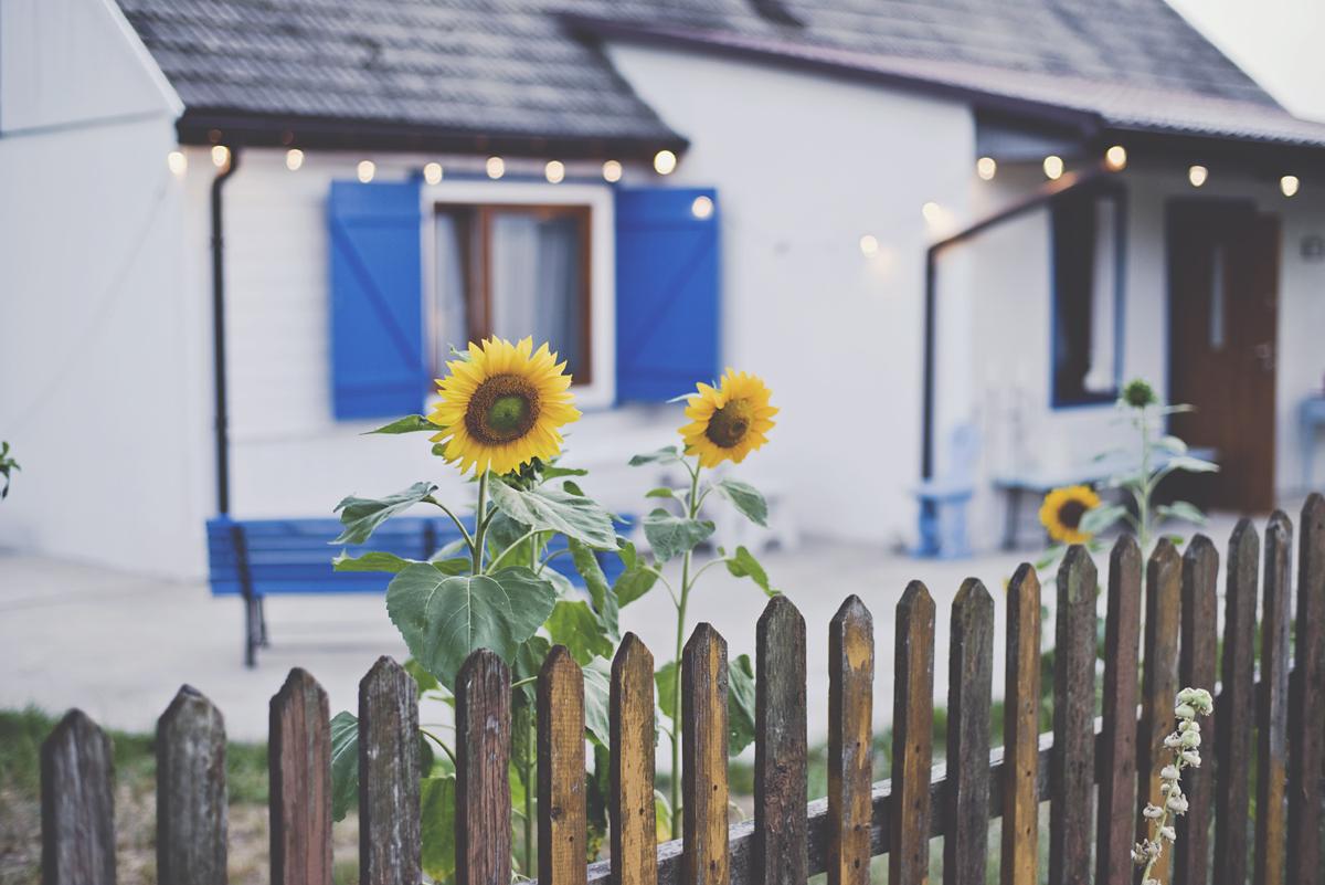 sunflowers, słoneczniki, dom na wsi, festoon lights