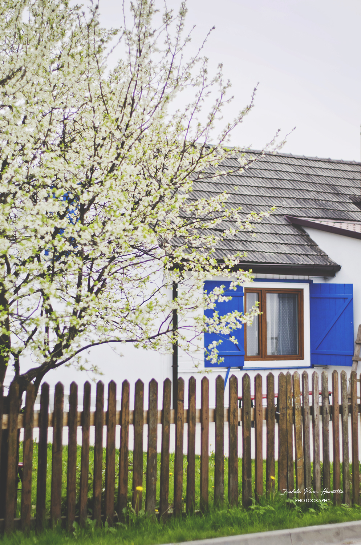 drewniany płot, biały płot, renowacja starego domu, wood house , wood fence