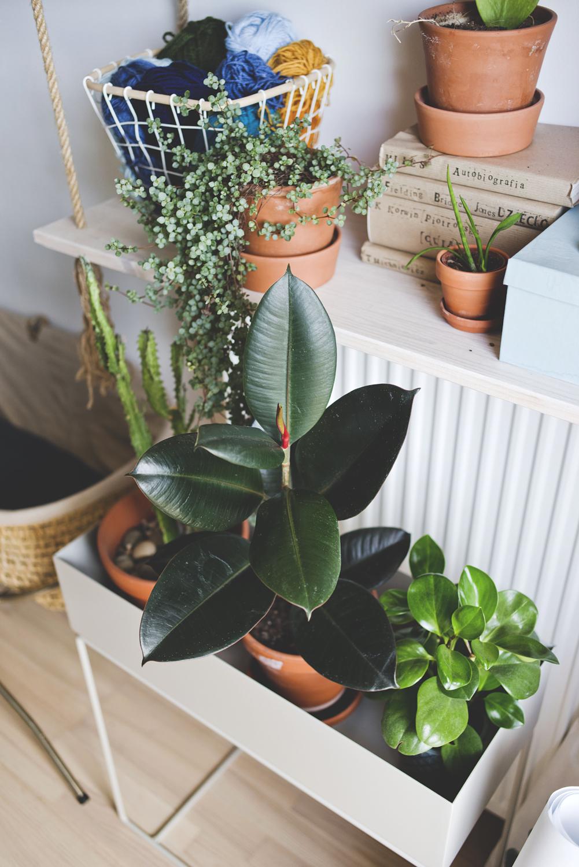 rosliny w domu